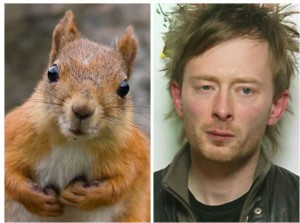 Thom York (Squirrel 1)
